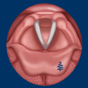 Icon for Vocal Folds ID