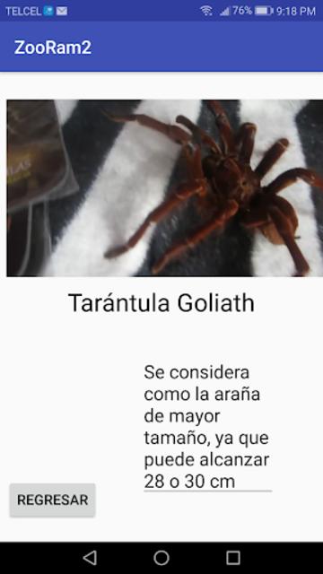 Especies de arañas screenshot 1
