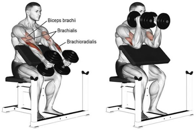 Gym Workout Exercises screenshot 1