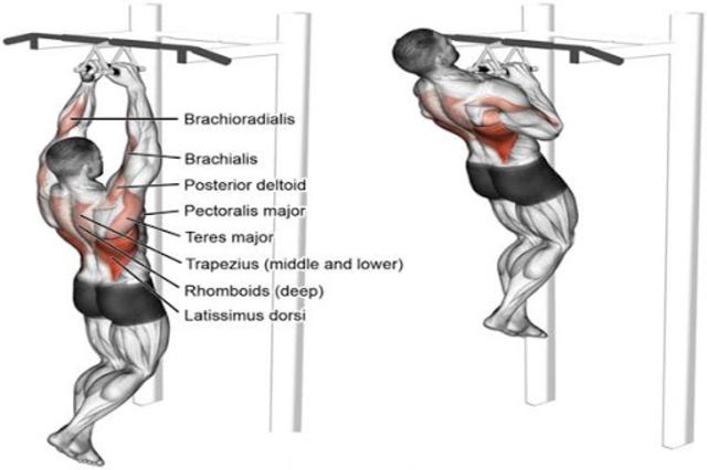 Gym Workout Exercises screenshot 2