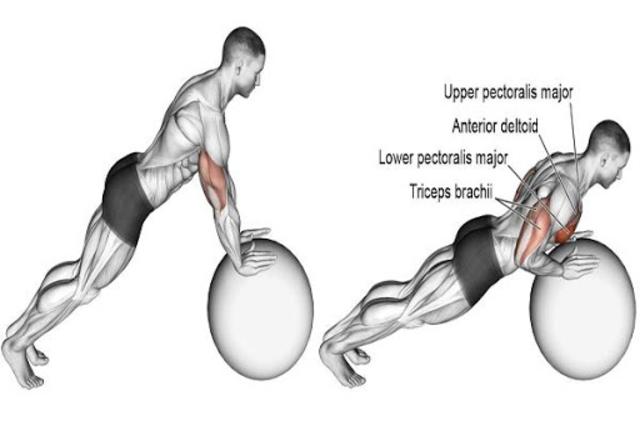 Gym Workout Exercises screenshot 4