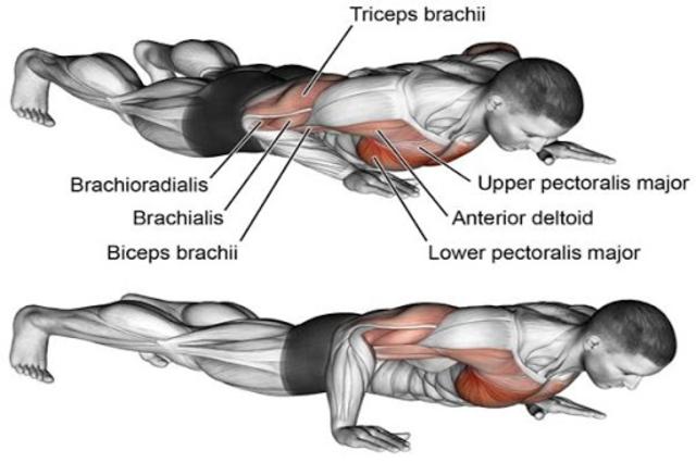 Gym Workout Exercises screenshot 5