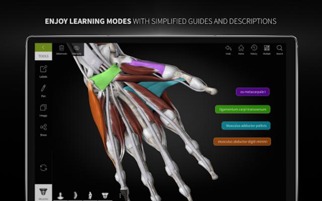 Anatomyka - 3D Human Anatomy Atlas screenshot 24
