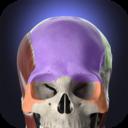 Icon for Anatomyka - Interactive 3D Human Anatomy