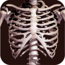Icon for Osseous System in 3D (Anatomy)