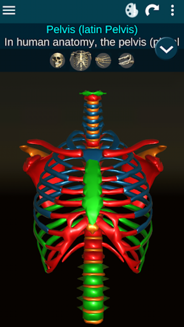 Osseous System in 3D (Anatomy) screenshot 2