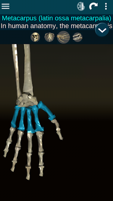 Osseous System in 3D (Anatomy) screenshot 4
