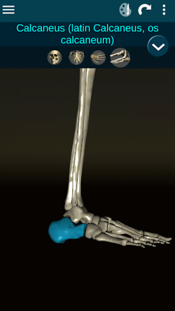 Osseous System in 3D (Anatomy) screenshot 7