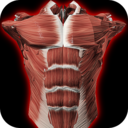 Icon for Muscular System 3D (anatomy)