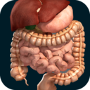 Icon for Internal Organs in 3D (Anatomy)