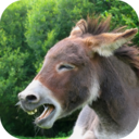Icon for Donkey Sounds