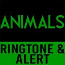 Icon for Animals-Maroon 5 Ringtone