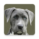 Icon for All Dog Breed Profiles