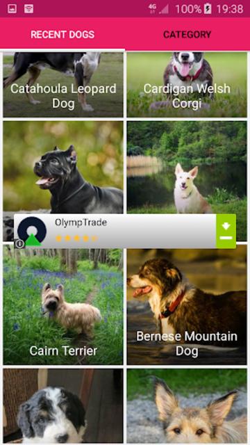 All Dog Breed Profiles screenshot 5