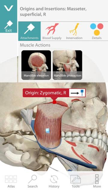 Human Anatomy Atlas screenshot 5
