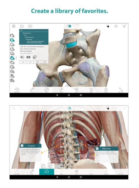 Human Anatomy Atlas screenshot 9