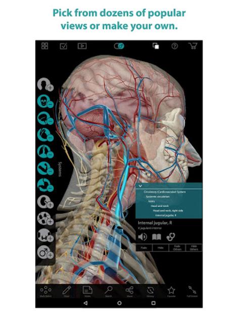 Human Anatomy Atlas screenshot 12