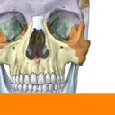 Icon for Sobotta Anatomy