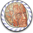 Icon for Speed Angiology MD