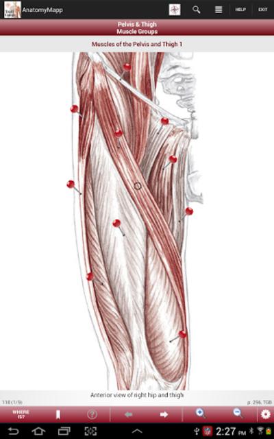 AnatomyMapp screenshot 8