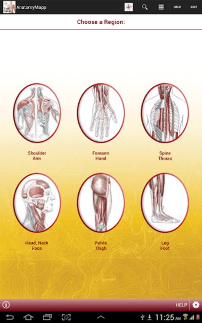 AnatomyMapp screenshot 11