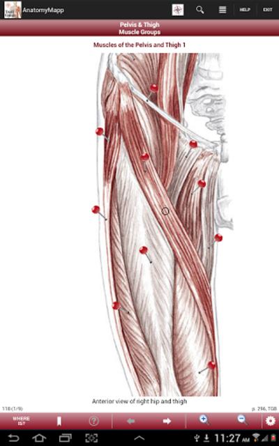 AnatomyMapp screenshot 13