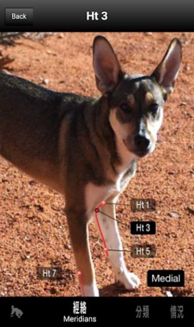 Canine AcuPoints screenshot 4