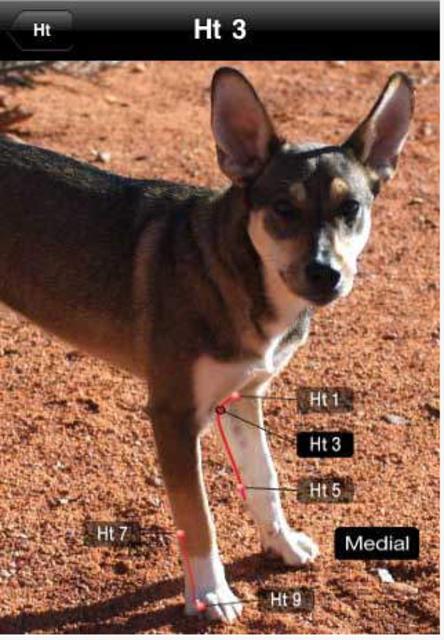 Canine AcuPoints screenshot 10