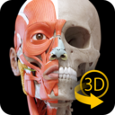 Icon for Muscle   Skeleton - 3D Atlas of Anatomy