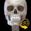 Skeleton | 3D Anatomy