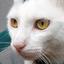 Cat Sounds - Meow Noises