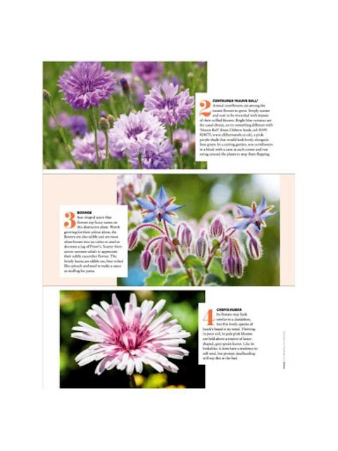 The English Garden Magazine screenshot 2