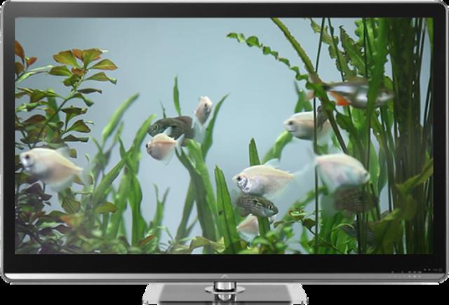 Fish Tank on TV via Chromecast screenshot 1