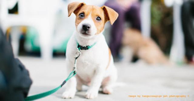 Sound Proof Puppy Training screenshot 8