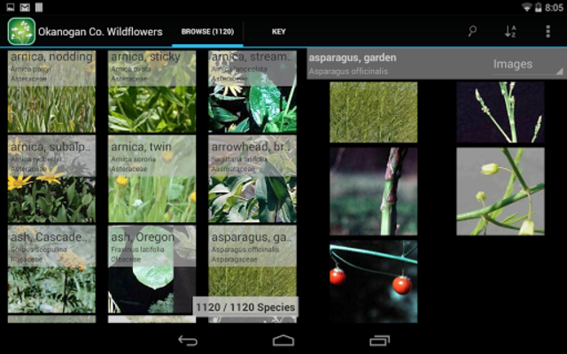 Central West California Plants screenshot 9