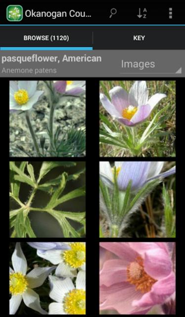 3250 Great Plains Wildflowers screenshot 3