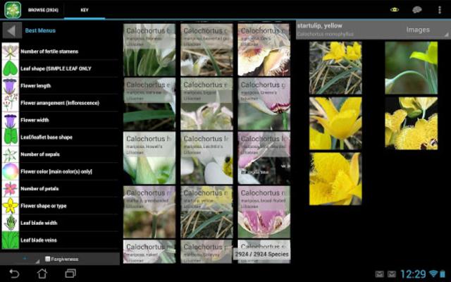 3250 Great Plains Wildflowers screenshot 6