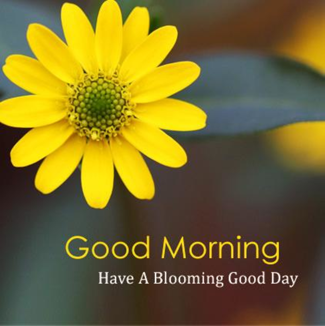 Good morning Flower Wallpapers Colorful Roses 4K screenshot 8