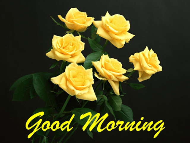 Good morning Flower Wallpapers Colorful Roses 4K screenshot 10