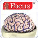 Icon for NEUROANATOMY - Digital Atlas