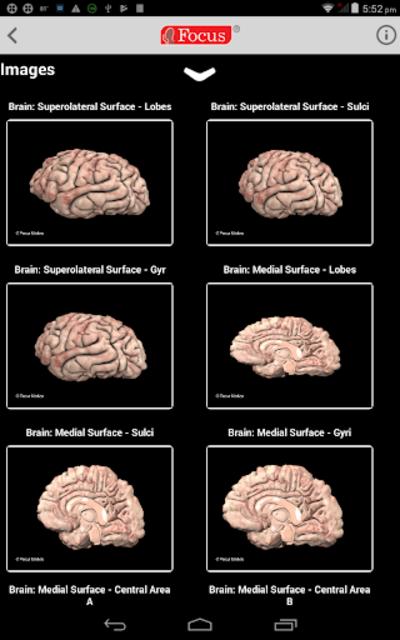 NEUROANATOMY - Digital Atlas screenshot 11