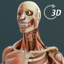 Icon for Visual Anatomy 3D | Human