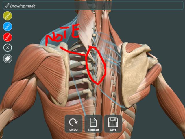 Visual Anatomy 3D | Human screenshot 11