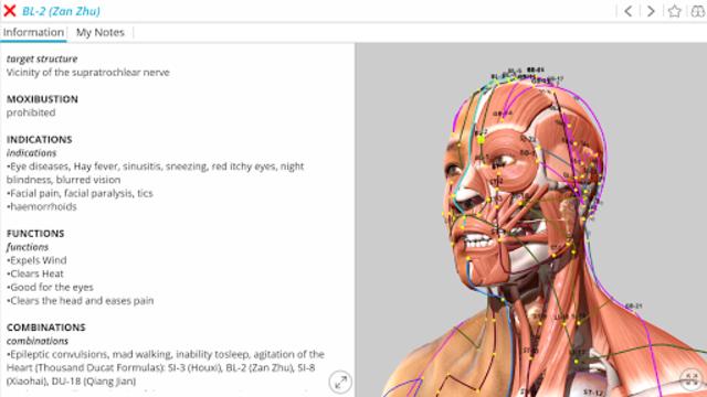 Visual Acupuncture 3D screenshot 1
