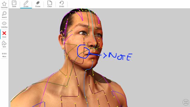 Visual Acupuncture 3D screenshot 6