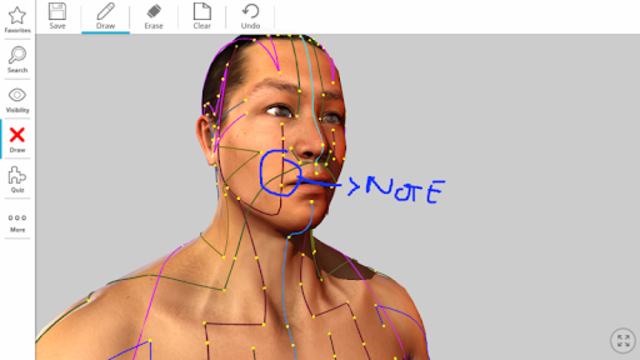 Visual Acupuncture 3D screenshot 12