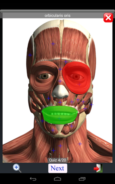 Anatomy Quiz Free screenshot 19