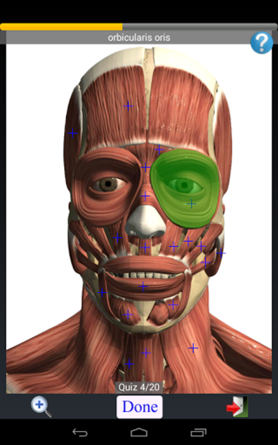 Anatomy Quiz Free screenshot 10