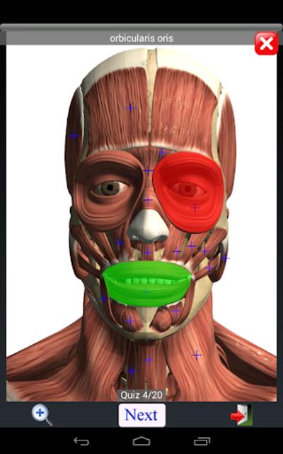 Anatomy Quiz Free screenshot 11