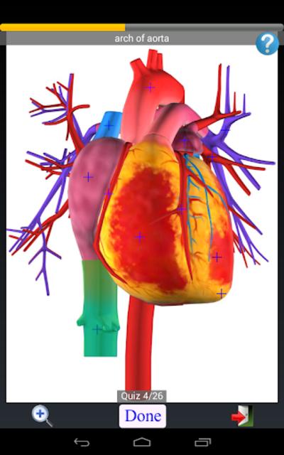 Anatomy Quiz Free screenshot 12